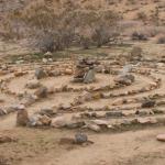 Desert Floor